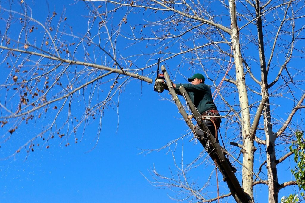 Contact Us-Miami Springs FL Tree Trimming and Stump Grinding Services-We Offer Tree Trimming Services, Tree Removal, Tree Pruning, Tree Cutting, Residential and Commercial Tree Trimming Services, Storm Damage, Emergency Tree Removal, Land Clearing, Tree Companies, Tree Care Service, Stump Grinding, and we're the Best Tree Trimming Company Near You Guaranteed!