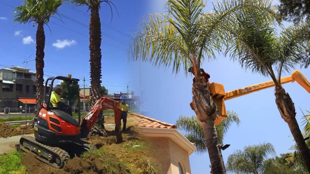 Palm tree trimming & palm tree removal-Miami Springs FL Tree Trimming and Stump Grinding Services-We Offer Tree Trimming Services, Tree Removal, Tree Pruning, Tree Cutting, Residential and Commercial Tree Trimming Services, Storm Damage, Emergency Tree Removal, Land Clearing, Tree Companies, Tree Care Service, Stump Grinding, and we're the Best Tree Trimming Company Near You Guaranteed!
