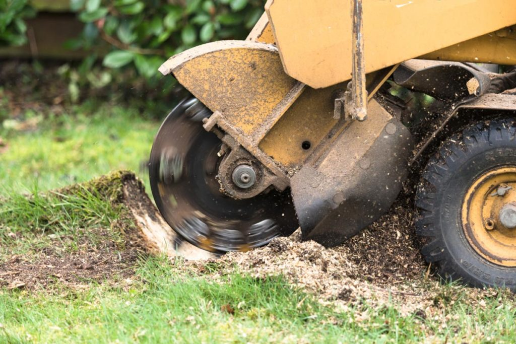 Stump Grinding-Miami Springs FL Tree Trimming and Stump Grinding Services-We Offer Tree Trimming Services, Tree Removal, Tree Pruning, Tree Cutting, Residential and Commercial Tree Trimming Services, Storm Damage, Emergency Tree Removal, Land Clearing, Tree Companies, Tree Care Service, Stump Grinding, and we're the Best Tree Trimming Company Near You Guaranteed!