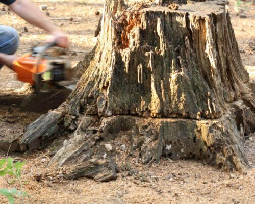 Stump Removal-Miami Springs FL Tree Trimming and Stump Grinding Services-We Offer Tree Trimming Services, Tree Removal, Tree Pruning, Tree Cutting, Residential and Commercial Tree Trimming Services, Storm Damage, Emergency Tree Removal, Land Clearing, Tree Companies, Tree Care Service, Stump Grinding, and we're the Best Tree Trimming Company Near You Guaranteed!