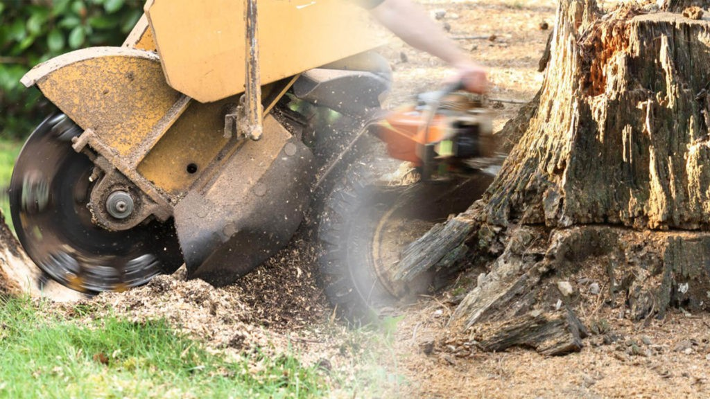Stump grinding & removal-Miami Springs FL Tree Trimming and Stump Grinding Services-We Offer Tree Trimming Services, Tree Removal, Tree Pruning, Tree Cutting, Residential and Commercial Tree Trimming Services, Storm Damage, Emergency Tree Removal, Land Clearing, Tree Companies, Tree Care Service, Stump Grinding, and we're the Best Tree Trimming Company Near You Guaranteed!