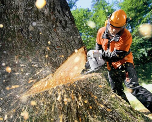 Tree Cutting-Miami Springs FL Tree Trimming and Stump Grinding Services-We Offer Tree Trimming Services, Tree Removal, Tree Pruning, Tree Cutting, Residential and Commercial Tree Trimming Services, Storm Damage, Emergency Tree Removal, Land Clearing, Tree Companies, Tree Care Service, Stump Grinding, and we're the Best Tree Trimming Company Near You Guaranteed!