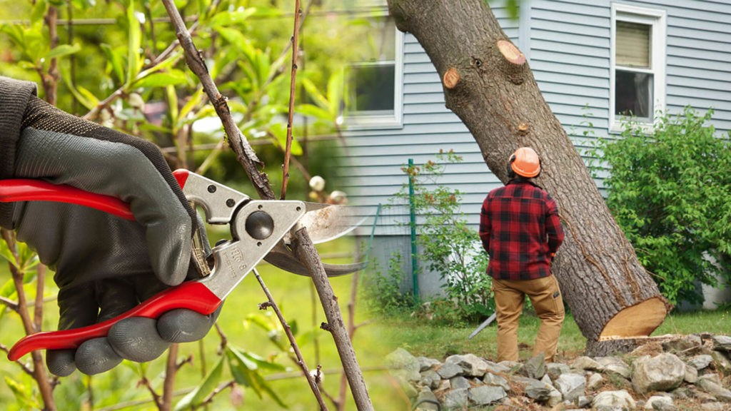 Tree pruning & tree removal-Miami Springs FL Tree Trimming and Stump Grinding Services-We Offer Tree Trimming Services, Tree Removal, Tree Pruning, Tree Cutting, Residential and Commercial Tree Trimming Services, Storm Damage, Emergency Tree Removal, Land Clearing, Tree Companies, Tree Care Service, Stump Grinding, and we're the Best Tree Trimming Company Near You Guaranteed!